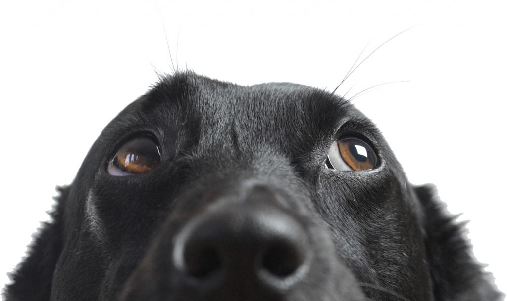 Éducateur de chien