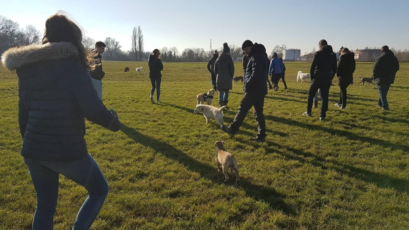 COurs collectif chiots