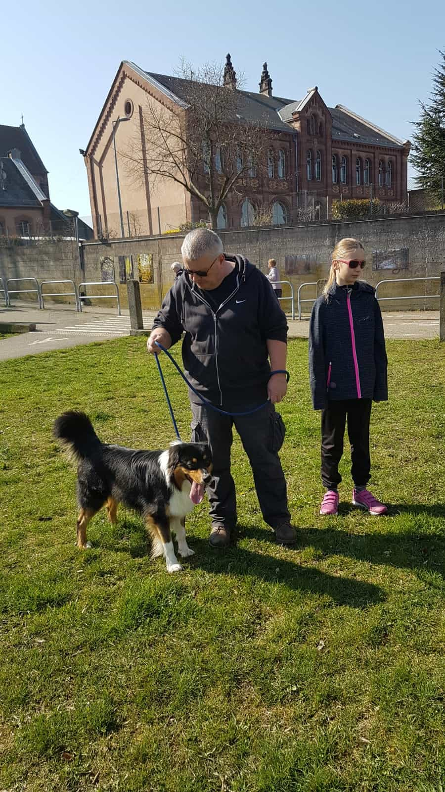 cours collectifs chiens adultes